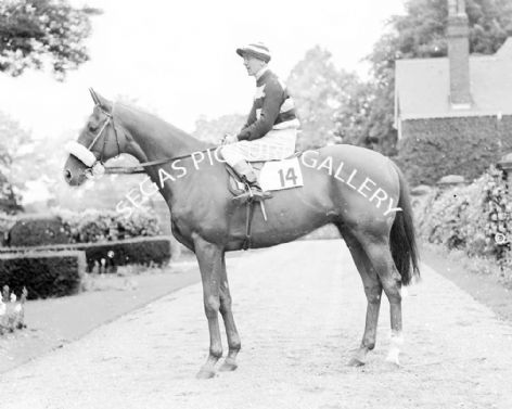 Racehorse King's Beeches with Jockey Manny Mercer